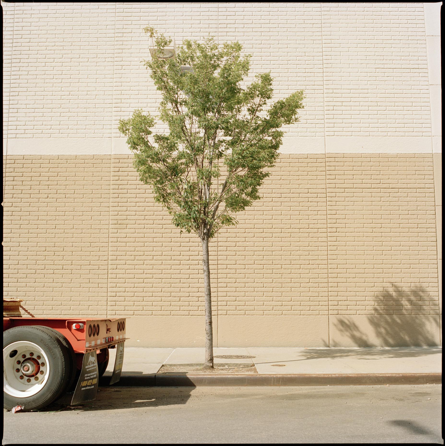 A small tree basks in the summer afternoon light  on Smith St, Brooklyn, New York City.